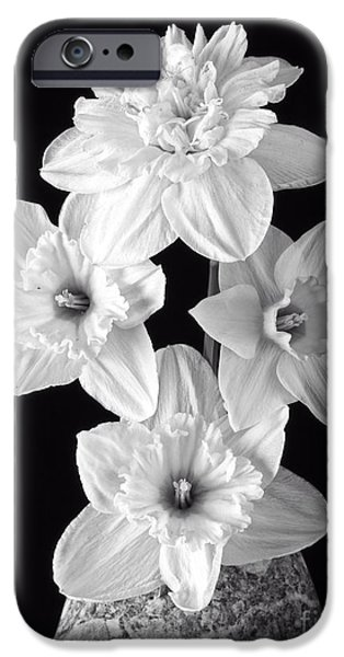 Fresh iPhone Cases - Daffodils iPhone Case by Edward Fielding