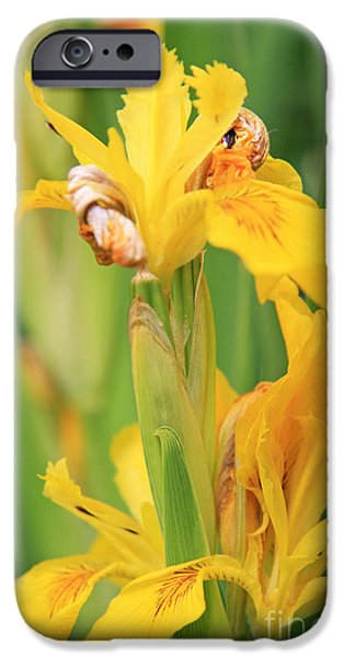 Sheets iPhone Cases - Irises iPhone Case by Lali Kacharava