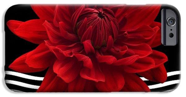 Bathroom Prints iPhone Cases - Dahlia Flower and Wavy Lines Triptych Canvas 2 - Red iPhone Case by Natalie Kinnear