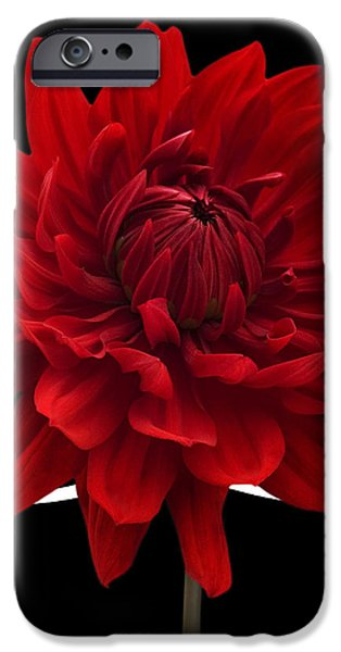 Dahlia Flower and Wavy Lines Triptych Canvas 2 - Red iPhone Case by Natalie Kinnear
