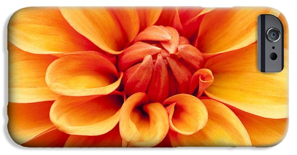 July iPhone Cases - Dahlia Squared iPhone Case by Anne Gilbert