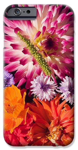 Dahlia iPhone Cases - Dahlia Zinnia Bachelors Buttons Flowers iPhone Case by Keith Webber Jr