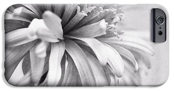 Flora Photographs iPhone Cases - Dainty Daisy iPhone Case by Priska Wettstein