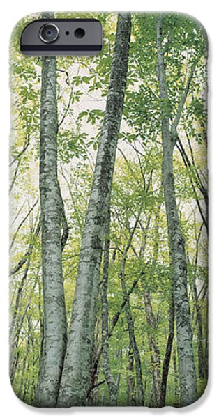 Forest Floor iPhone Cases - Daisen Tottori Japan iPhone Case by Panoramic Images