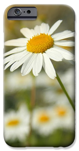 Variant iPhone Cases - Daisies ... again - original iPhone Case by Variance Collections