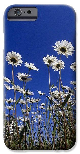 Innocence iPhone Cases - Daisies & Blue Sky Summer Alaska iPhone Case by John Warden