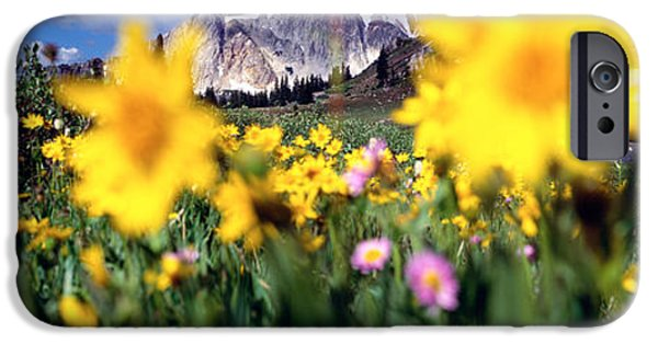 Meadow Photographs iPhone Cases - Daisies, Flowers, Field, Mountain iPhone Case by Panoramic Images