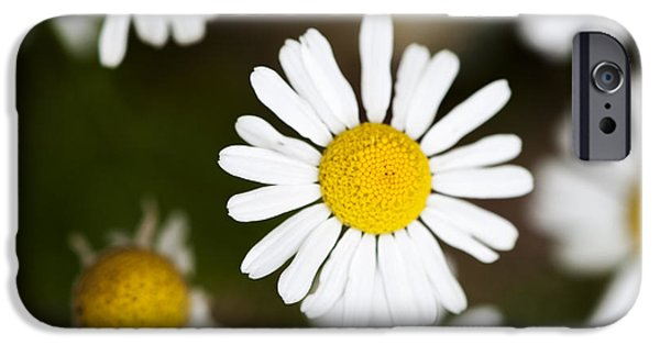 Botany Photographs iPhone Cases - Daisies iPhone Case by Juli Scalzi