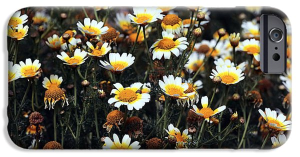 Delos iPhone Cases - Daisies on Delos iPhone Case by John Rizzuto