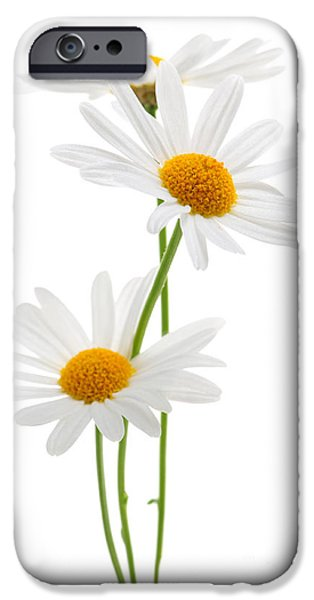 Grow iPhone Cases - Daisies on white background iPhone Case by Elena Elisseeva