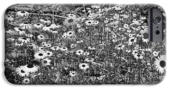 Monotone iPhone Cases - Daisies Wide Black and White iPhone Case by Allan Van Gasbeck