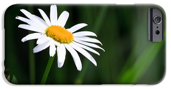 Flower Gardens Photographs iPhone Cases - Daisy - Bellis perennis iPhone Case by Bob Orsillo