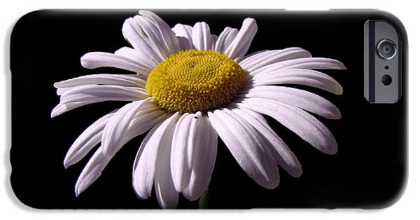 Business Photographs iPhone Cases - Daisy iPhone Case by David Dehner