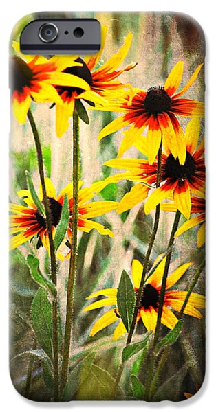 Daisy Do iPhone Case by Marty Koch
