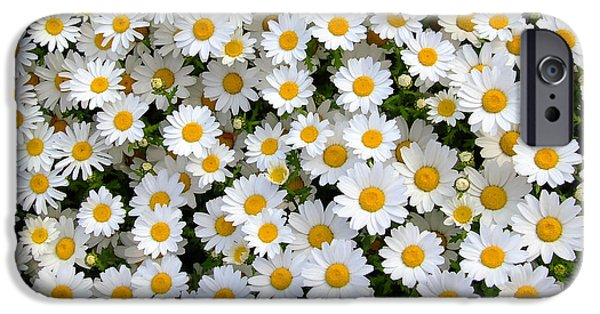 Nature Abstract iPhone Cases - Daisy Flower 2 iPhone Case by Andrea Anderegg