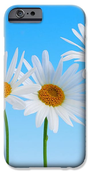Daisy flowers on blue background iPhone Case by Elena Elisseeva