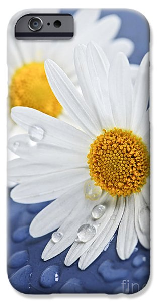 Tender iPhone Cases - Daisy flowers with water drops iPhone Case by Elena Elisseeva