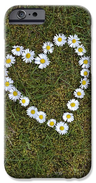 Daisy Photographs iPhone Cases - Daisy Heart iPhone Case by Tim Gainey