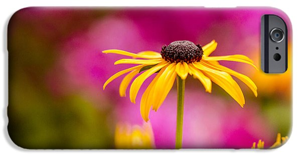 Rainy Day iPhone Cases - Daisy in the Pink iPhone Case by Teri Virbickis