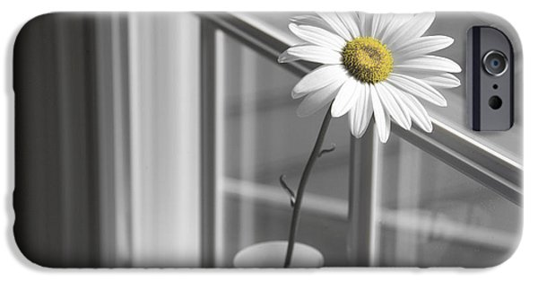 Daisy Photographs iPhone Cases - Daisy in the Window iPhone Case by Diane Diederich