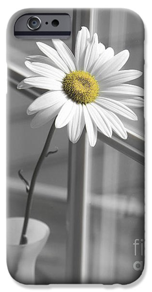 Daisy Bud iPhone Cases - Daisy in the Window iPhone Case by Diane Diederich