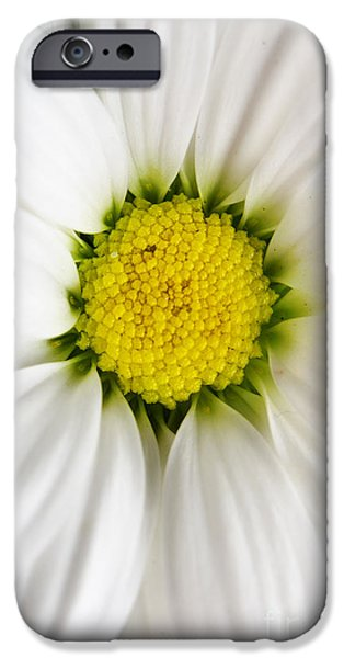 Petals Pyrography iPhone Cases - Daisy iPhone Case by Jelena Jovanovic