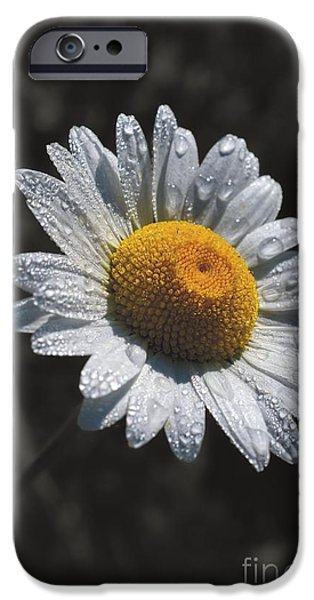 Disc iPhone Cases - Daisy Morning Dew iPhone Case by Henry Kowalski