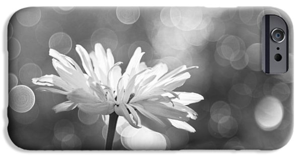 Rain iPhone Cases - Daisy Rain iPhone Case by Theresa Tahara