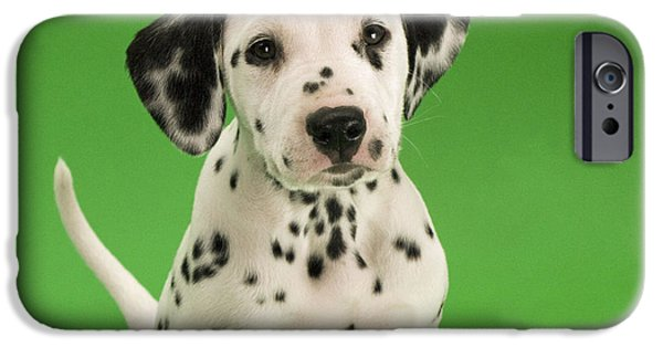 Dog Close-up iPhone Cases - Dalmatian Puppy Dog iPhone Case by Steve Downer