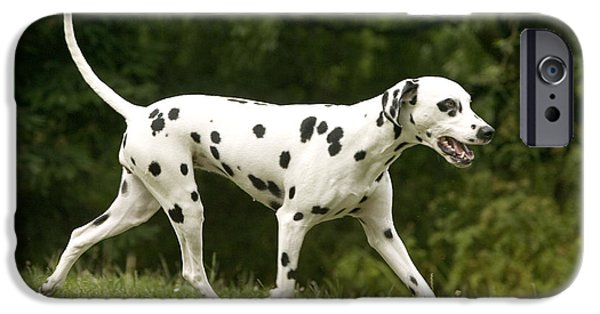 Dog Trots Photographs iPhone Cases - Dalmatian Running iPhone Case by Jean-Michel Labat