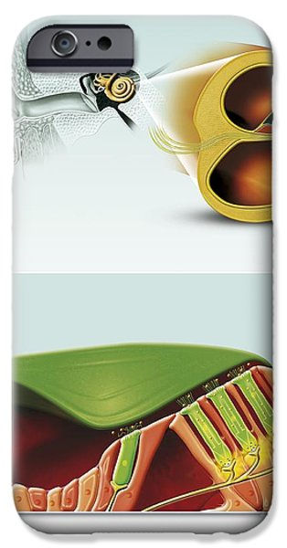 Abnormal iPhone Cases - Damaged Hearing, Artwork iPhone Case by Claus Lunau / Bonnier Publications