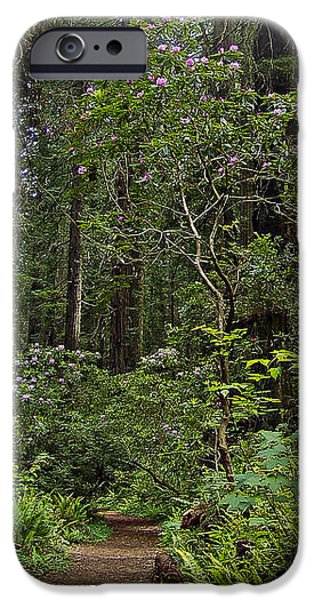 Damnation Creek Trail iPhone Case by Larry  Depee