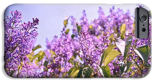 Lilac Flower iPhone Cases - Dance of the Lilacs iPhone Case by Colleen Kammerer