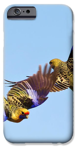 Dance of the Yellow Crimson Rosella iPhone Case by Bill  Robinson