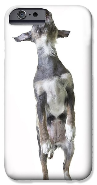 Cute Puppy Photographs iPhone Cases - Dancing Dog iPhone Case by Edward Fielding