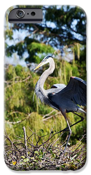 Michelle iPhone Cases - Dancing Heron iPhone Case by Michelle Wiarda