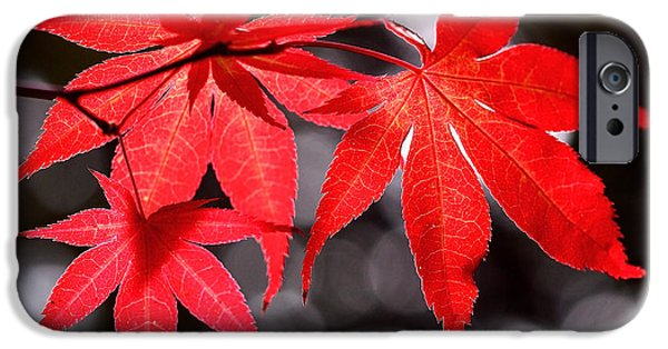 Autumn Art iPhone Cases - Dancing Japanese Maple iPhone Case by Rona Black