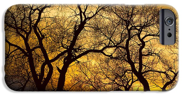Epic iPhone Cases - Dancing Trees Golden Sunset iPhone Case by James BO  Insogna