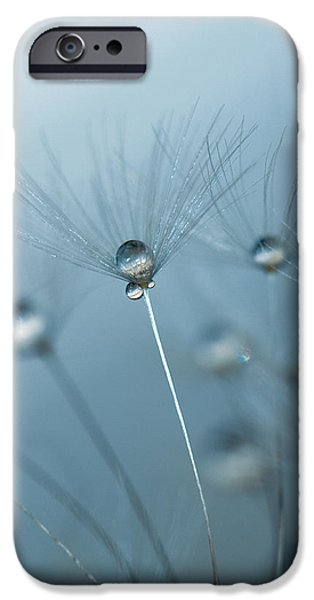 Dandelion - Standing Tall iPhone Case by Rebecca Cozart