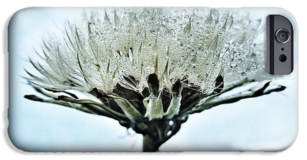 Raindrops iPhone Cases - Dandelion after Rain iPhone Case by Marianna Mills