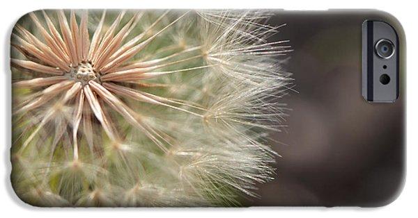 Garden iPhone Cases - Dandelion Art - So It Begins - By Sharon Cummings iPhone Case by Sharon Cummings