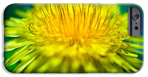 Yellow iPhone Cases - Dandelion Bloom  iPhone Case by Iris Richardson
