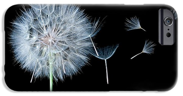 Daydreams Art Photographs iPhone Cases - Dandelion Dreaming iPhone Case by Cindy Singleton