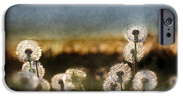Daydreams Art Photographs iPhone Cases - Dandelion Dusk iPhone Case by Cindy Singleton