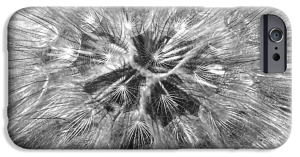 Monotone iPhone Cases - Dandelion Fireworks in Black and White iPhone Case by Rona Black