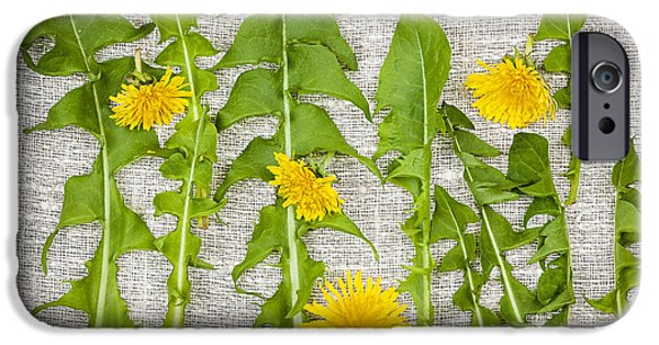 Woven iPhone Cases - Dandelion greens and flowers iPhone Case by Elena Elisseeva