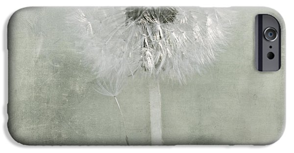 Flora Mixed Media iPhone Cases - Dandelion iPhone Case by Heike Hultsch