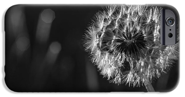 Ready To Fly iPhone Cases - Dandelion in black and white iPhone Case by Vishwanath Bhat