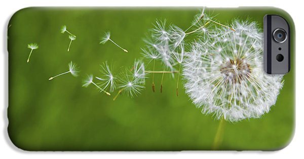 Weed iPhone Cases - Dandelion in the Wind iPhone Case by Diane Diederich