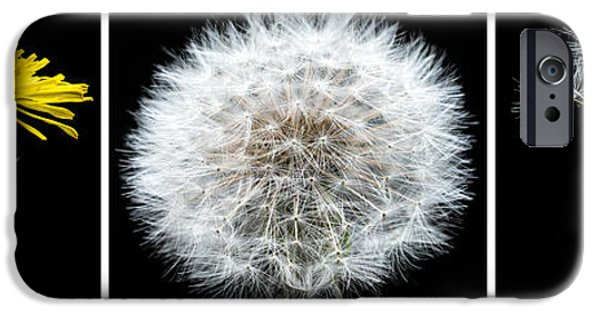 Weed iPhone Cases - Dandelion Life Cycle iPhone Case by Steve Gadomski